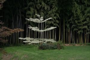 Bambuskogen